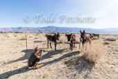 Owens Valley Burros-280